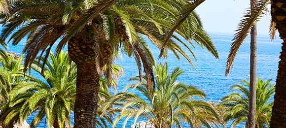 costa brava palmbomen